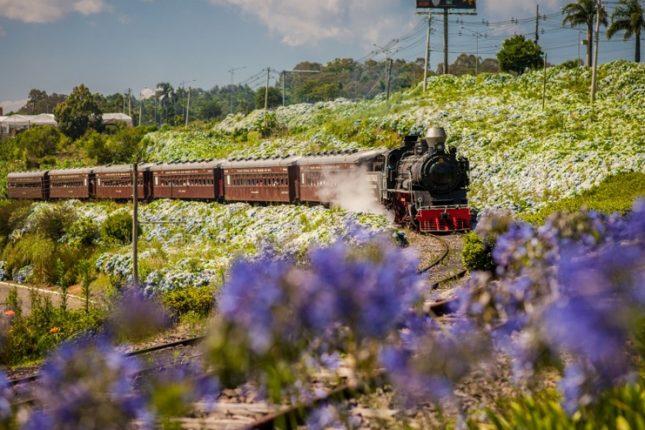 Tour Uva e Vinho - Trem Maria Fumaça