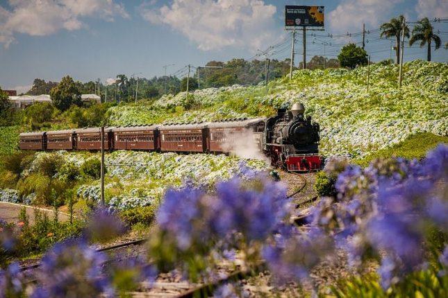 Tour Uva e Vinho com Trem Maria Fumaça